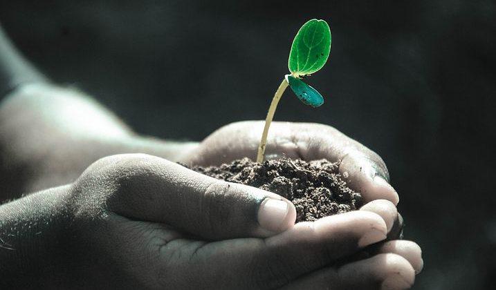 biotáplálkozás